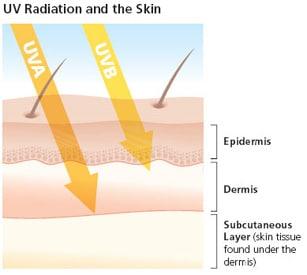 understanding uv radiation Understanding the factors that affect surface ultraviolet radiation j b kerr meteorological service of canada 4905 dufferin street downsview, canada m3h 5t4.